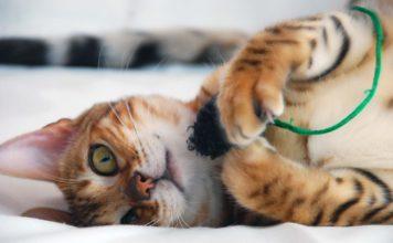 DIY Kätzchen Spielzeug