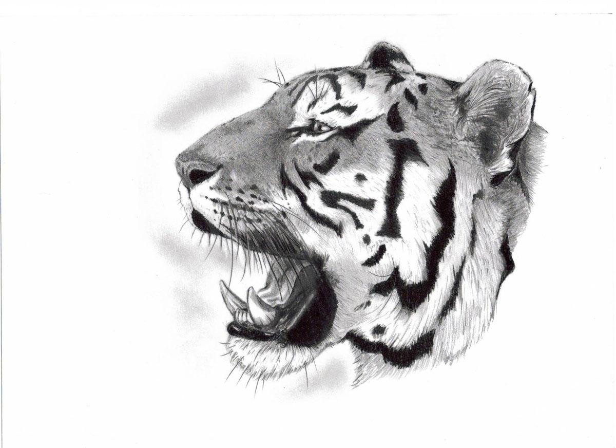 Náčrt tygr úsměv na rameni