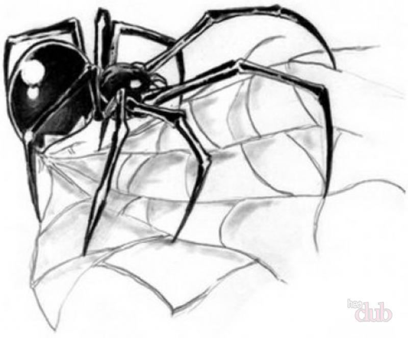 скица на паяжина татуировка паяк