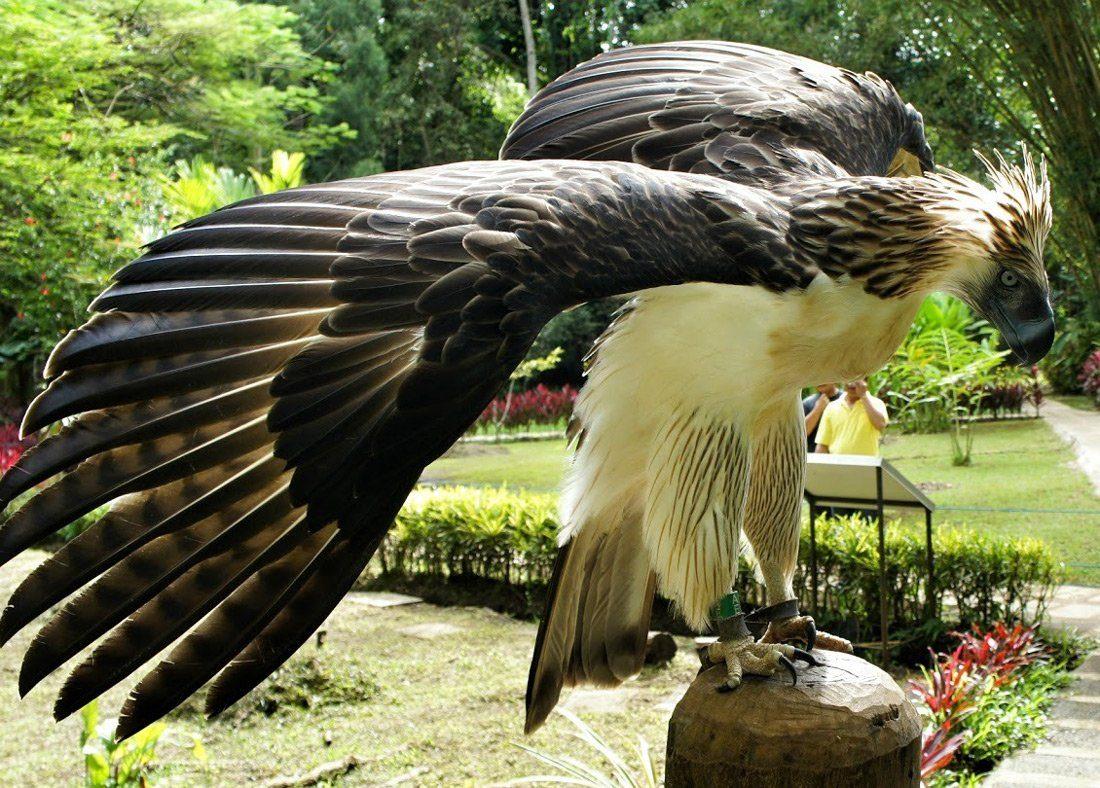najväčší vtáky Tumblr